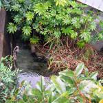 京都怪異譚 その3『血洗池~3つの伝説』