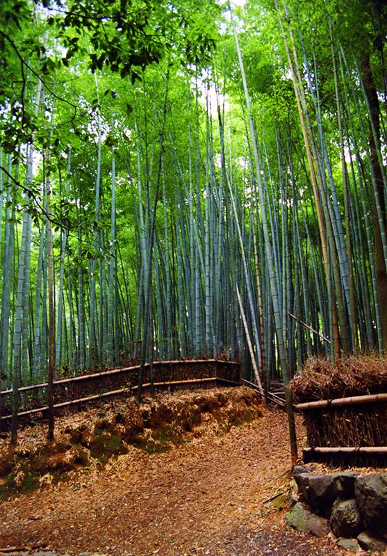 arashiyama 03