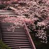 京都怪異譚 その22『形見の髪 ~清水寺の観音様にまつわる話』