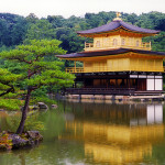 金閣寺 ~西方浄土への旅立ちを待ち続ける老松