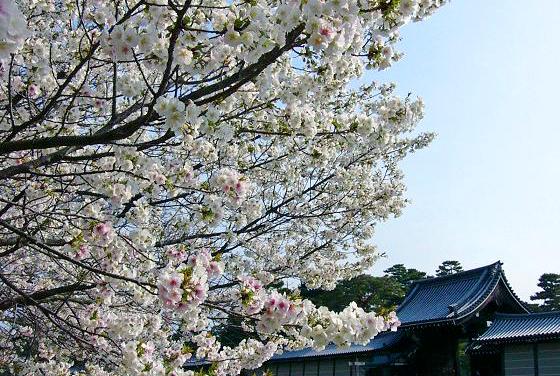 kyoto_gyoen nanafushigi 10