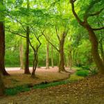 糺の森 ~神々のパワーが宿る原生林の森