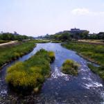 鴨川の不思議