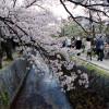 京都の話をしましょうか