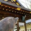 護王神社 ~狛イノシシが神社を護る!?