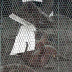 京都の表鬼門を護るお猿さん