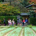 落柿舎 ~嵯峨野の小さな草庵